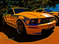 Mustang Shelby – Ford Named My Mustang Shelby
