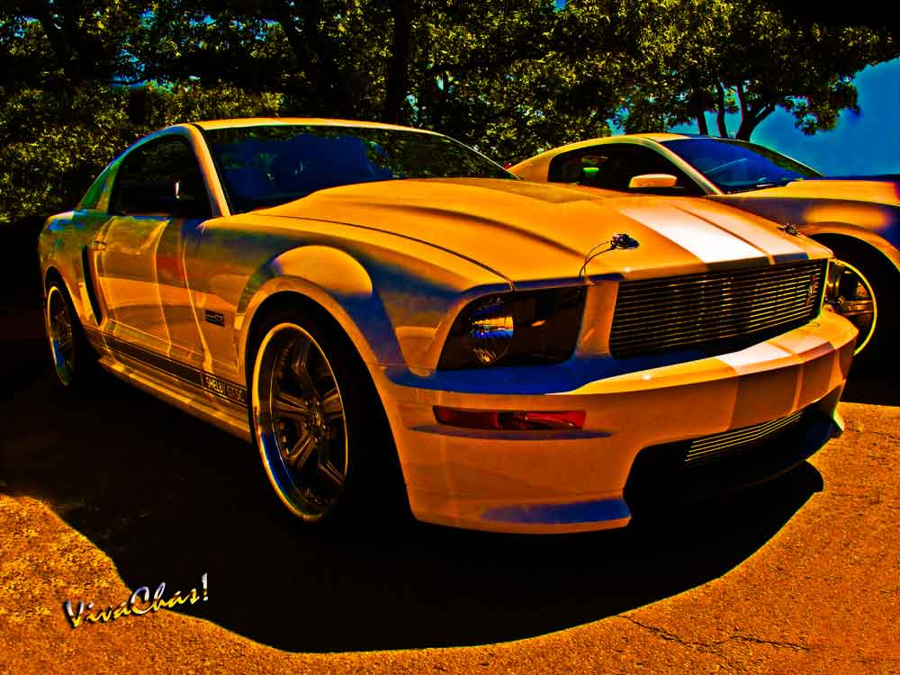 mustang shelby ford named my mustang shelby. Black Bedroom Furniture Sets. Home Design Ideas