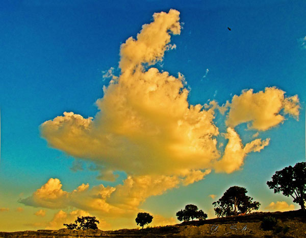Tree-line is spectacular as an enlargement - click the pix to shop for a print ~:0)